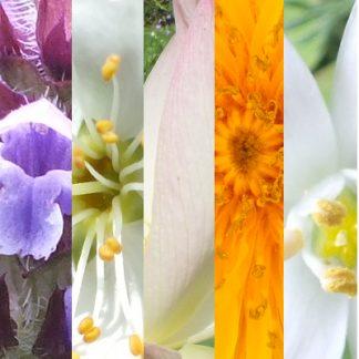 Blütenmischung 8 NOTFALL-BLÜTEN