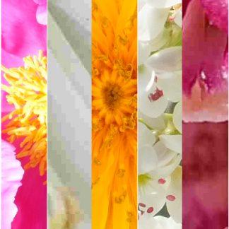 Blütenmischung AUSDAUER
