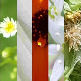 Blütenmischung ERHOLUNG