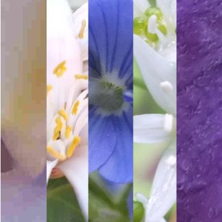Blütenmischung FRÜHLINGSERWACHEN