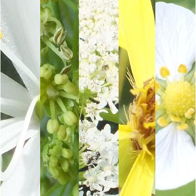 Blütenmischung GELASSENHEIT