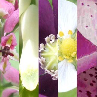 Blütenmischung GROSSE JUNGS