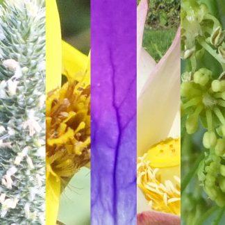 Blütenmischung GUTE IDEEN