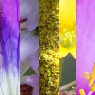 Blütenmischung GUTE LAUNE