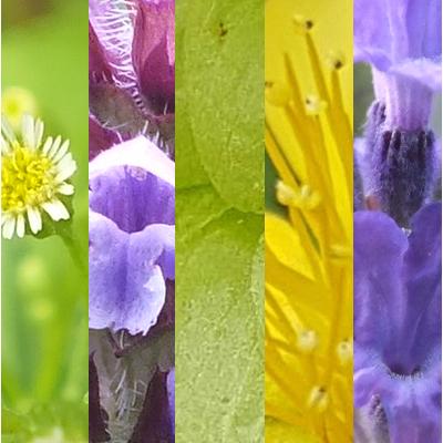 Blütenmischung GUTE NACHT