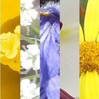 Blütenmischung GUTE REISE