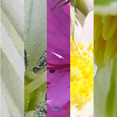 Blütenmischung GUTEN MORGEN