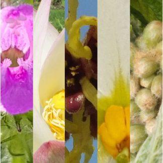 Blütenmischung INNERE RUHE