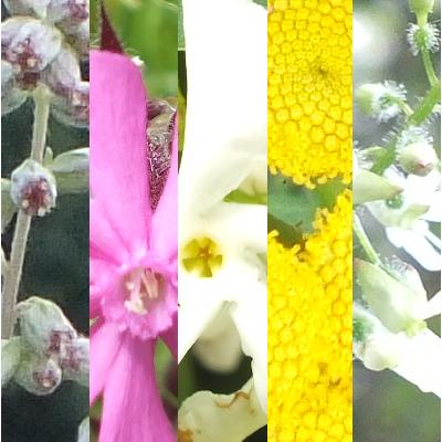 Blütenmischung INNERER MANN