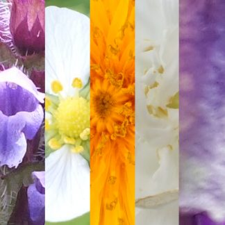 Blütenmischung INNERES KIND
