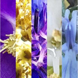 Blütenmischung KONZENTRATION