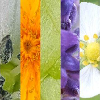 Blütenmischung KOPFFREI SPEZIAL