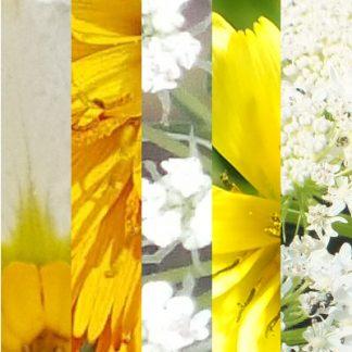 Blütenmischung KRAFT