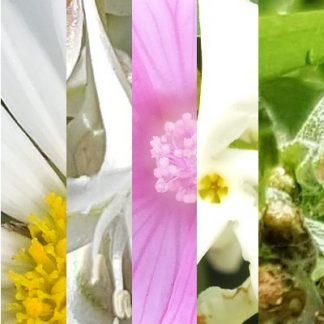 Blütenmischung LEBENSFREUDE