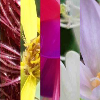 Blütenmischung LEBENSKRAFT