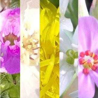 Blütenmischung LERNHILFE