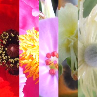 Blütenmischung SCHWANGERSCHAFT / GEBURT