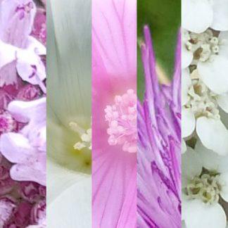 Blütenmischung SELBSTVERTRAUEN