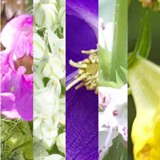 Blütenmischung TROST