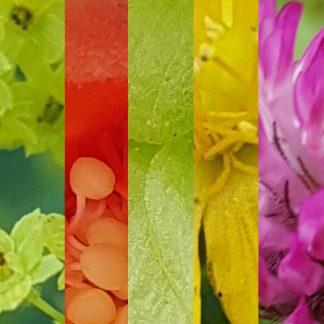 Blütenmischung WECHSELJAHRE
