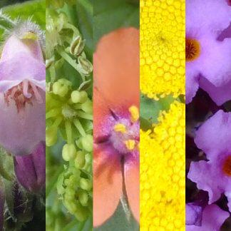 Blütenmischung WINTERLUST