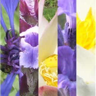 Blütenmischung ABWEHRKRAFT