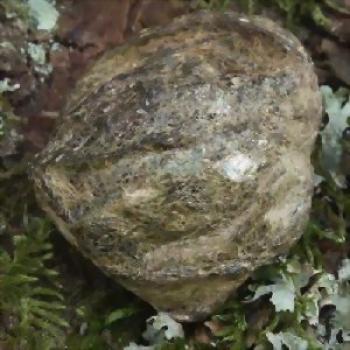 Steinessenz BIOTIT-LINSE